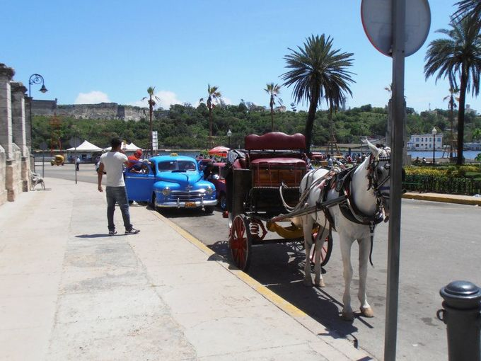 Classic American cars from the 1950s can be seen alongside horses and buggies in Old Havana. (Photo: Nancy Trejos, USA TODAY)