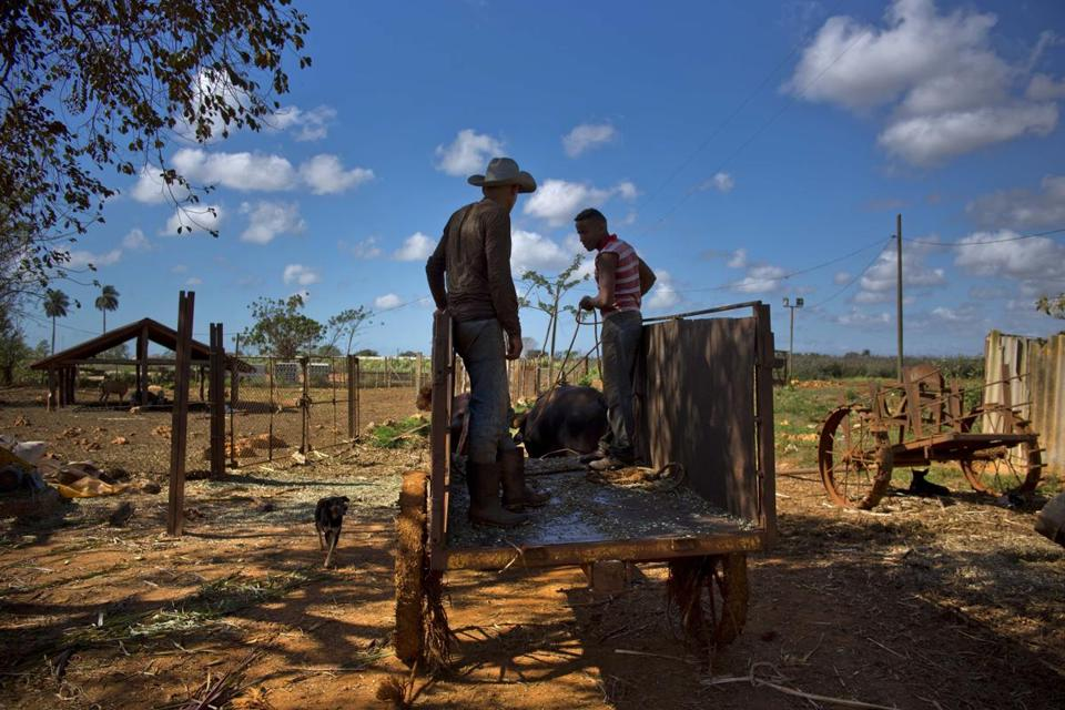 A worker rides on a cart pulled by oxen as he heads to work at an agricultural cooperative in Artemisa, Cuba, last month.  Associated Press